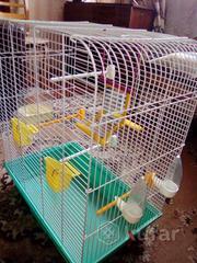 клетка для папугае есть все